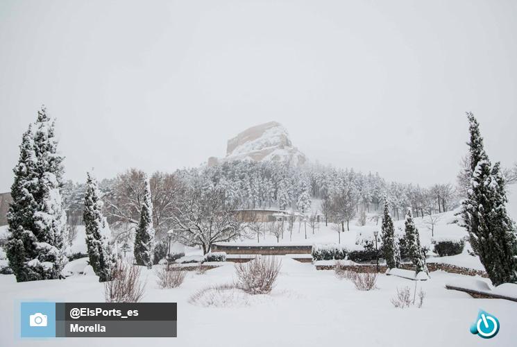 Morella nevada
