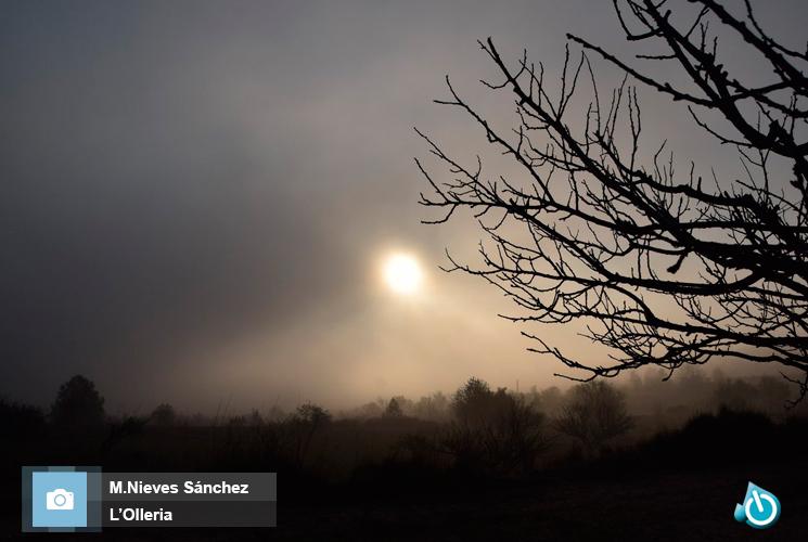 Olleria niebla